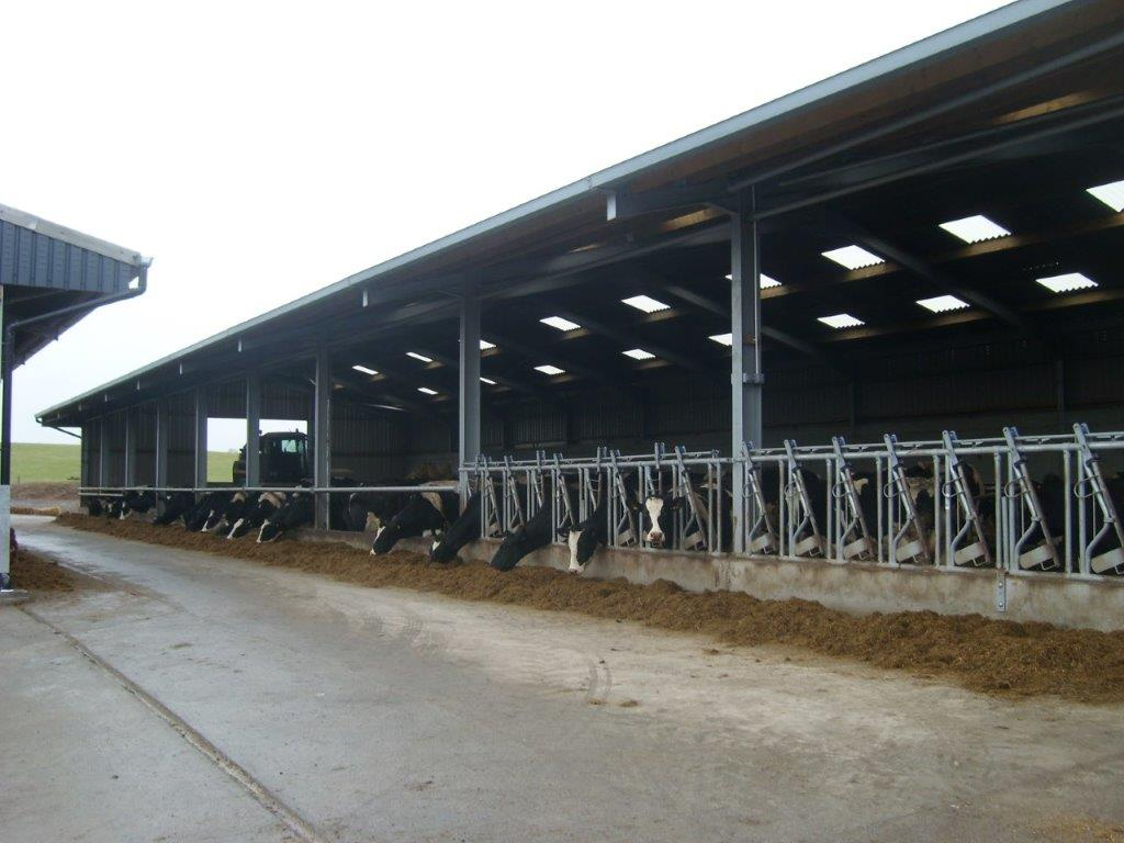 Cattle Building